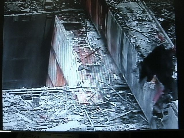 2 : Cette photo démontre, pour ceux qui pensaient que la cuve du réacteur avait explosé, que la dalle ronde anti-missile, située juste au dessus de l'enceinte de confinement, est toujours en place. Par-dessus cette dalle se trouve le pont roulant qui est tombé là lors de l'explosion du 14 mars 2011.