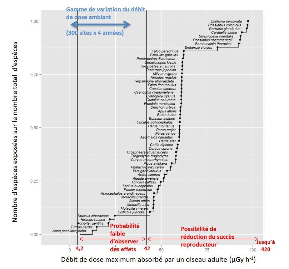 Représentation simplifiée de la variation du niveau d'exposition maximum des oiseaux adultes (exprimé en débit de dose) pour les 57 espèces de la communauté d'oiseaux observées sur les 300 sites et les 4 années d'étude. Comparaison avec la gamme de variation (en bleu) du débit de dose ambiant mesuré sur les sites et les gammes (en rouge) correspondant à divers effets chez les oiseaux publiées par la CIPR (2008) (Source IRSN)