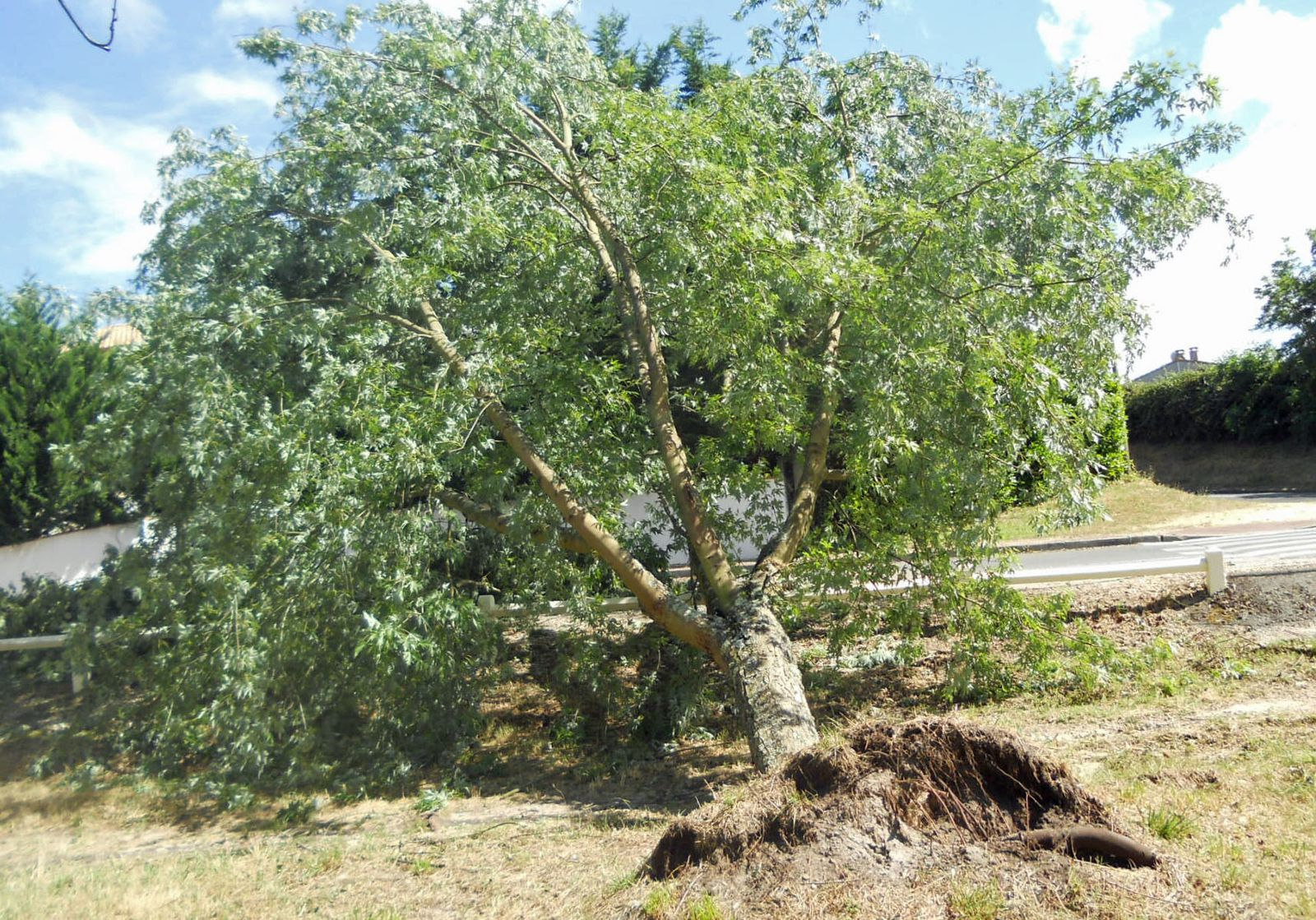 les arbres au lac Versein près de chez moi
