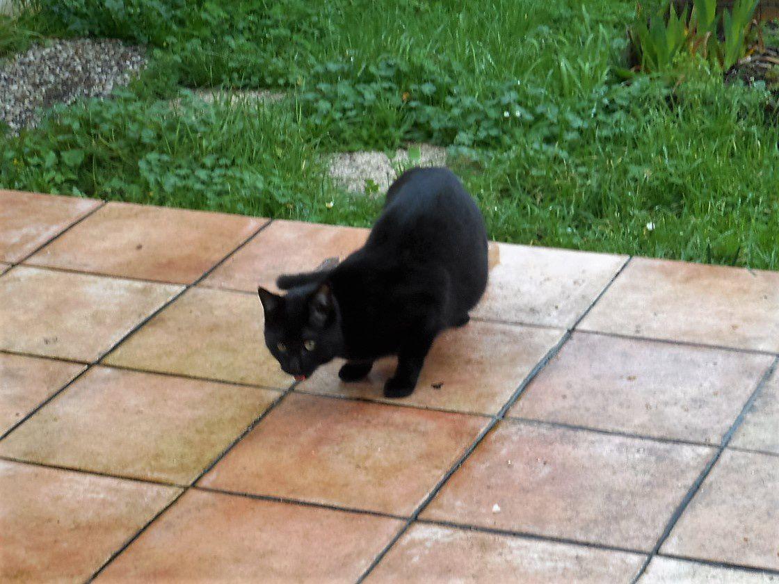 chattes noires