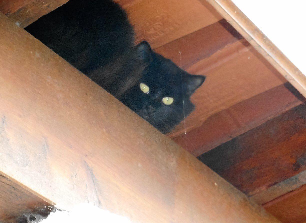chatte sous le toit