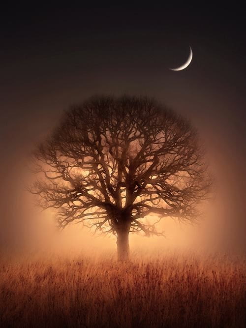 Tree of Litght, by Jenny Woodward