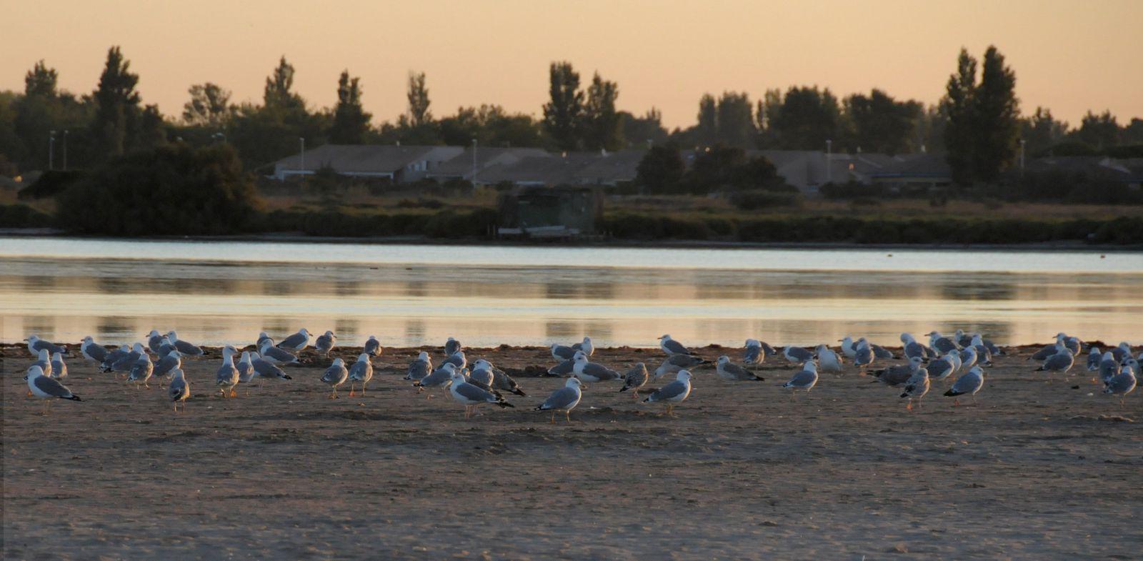 Traces d'oiseaux et d'enfants !!! (Photos Fcn, 3 septembre 2013)