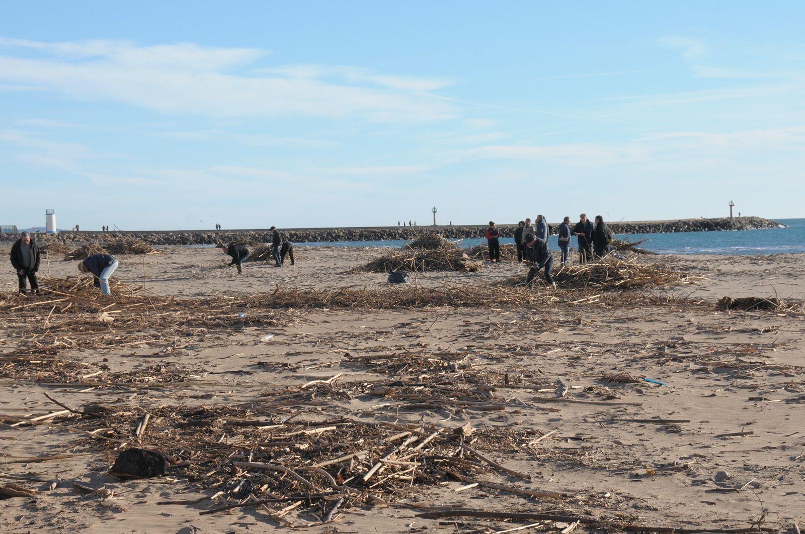 Un groupe de volontaires ramasse le bois !!!