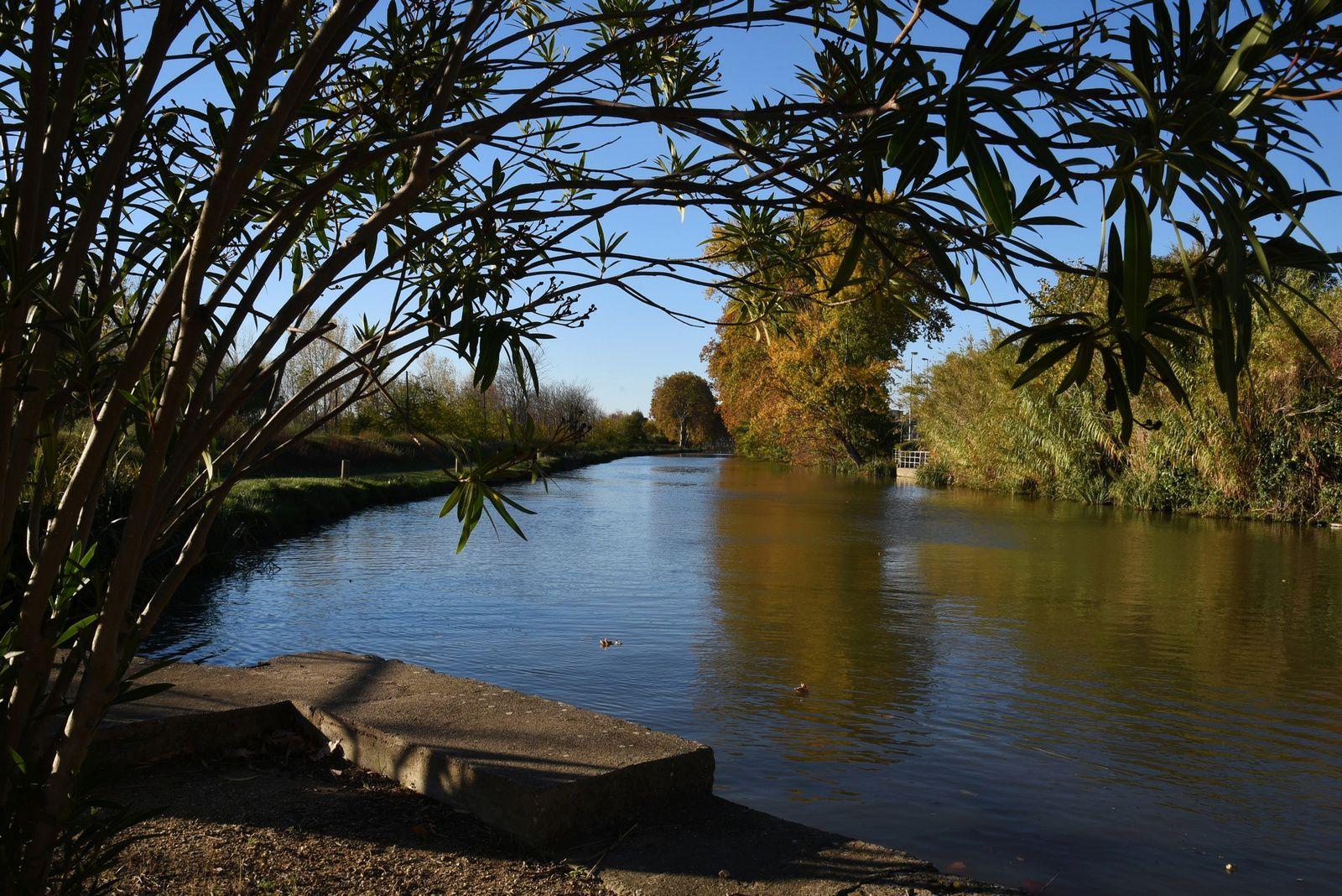 Canal du Midi à l'automne