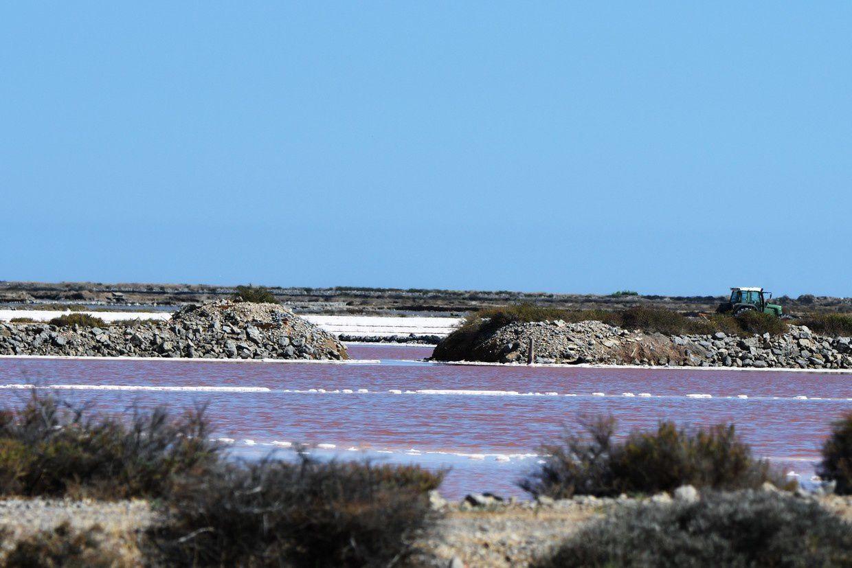Gruissan : le salin de l'île St Martin