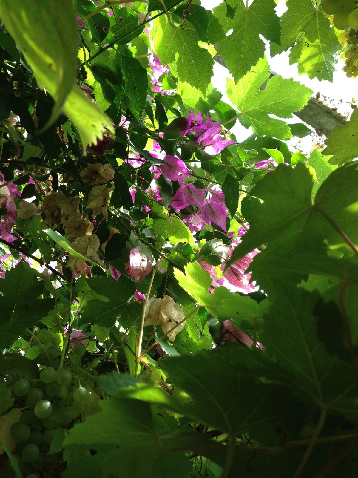 Hortensias/tournesols, un bouquet de septembre