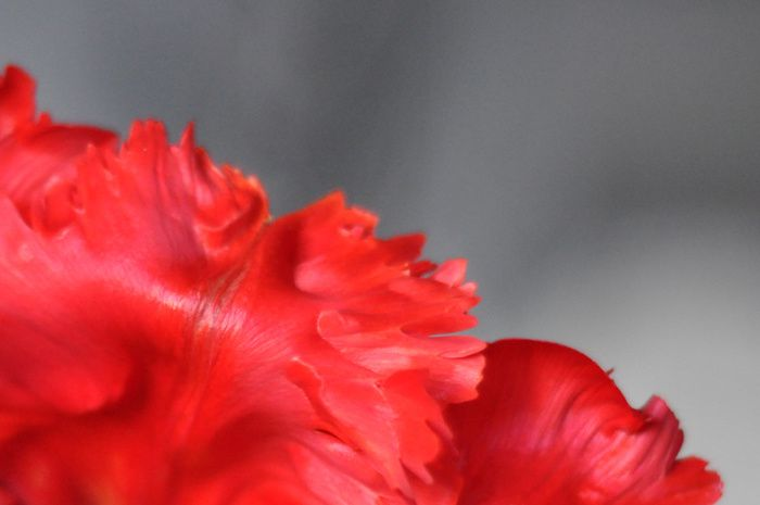 Rouge froufrou 2
