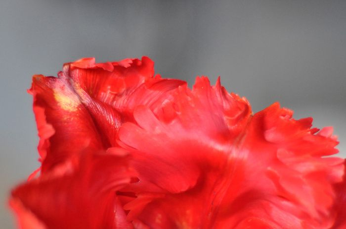 Rouge froufrou 3