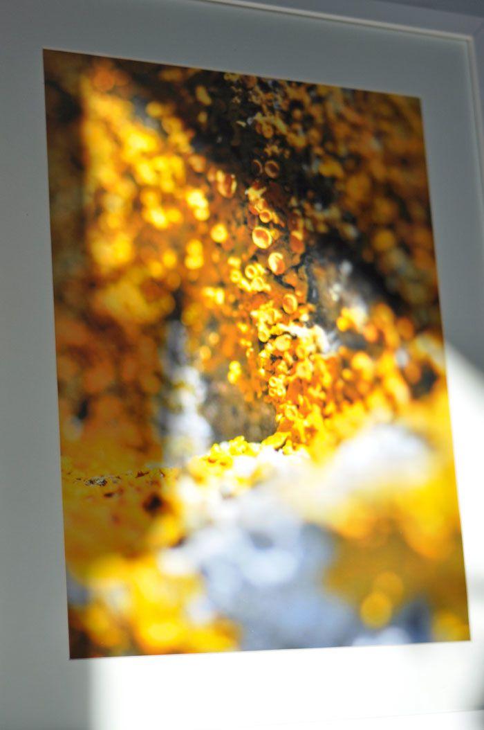 Série lichen, mise en scène