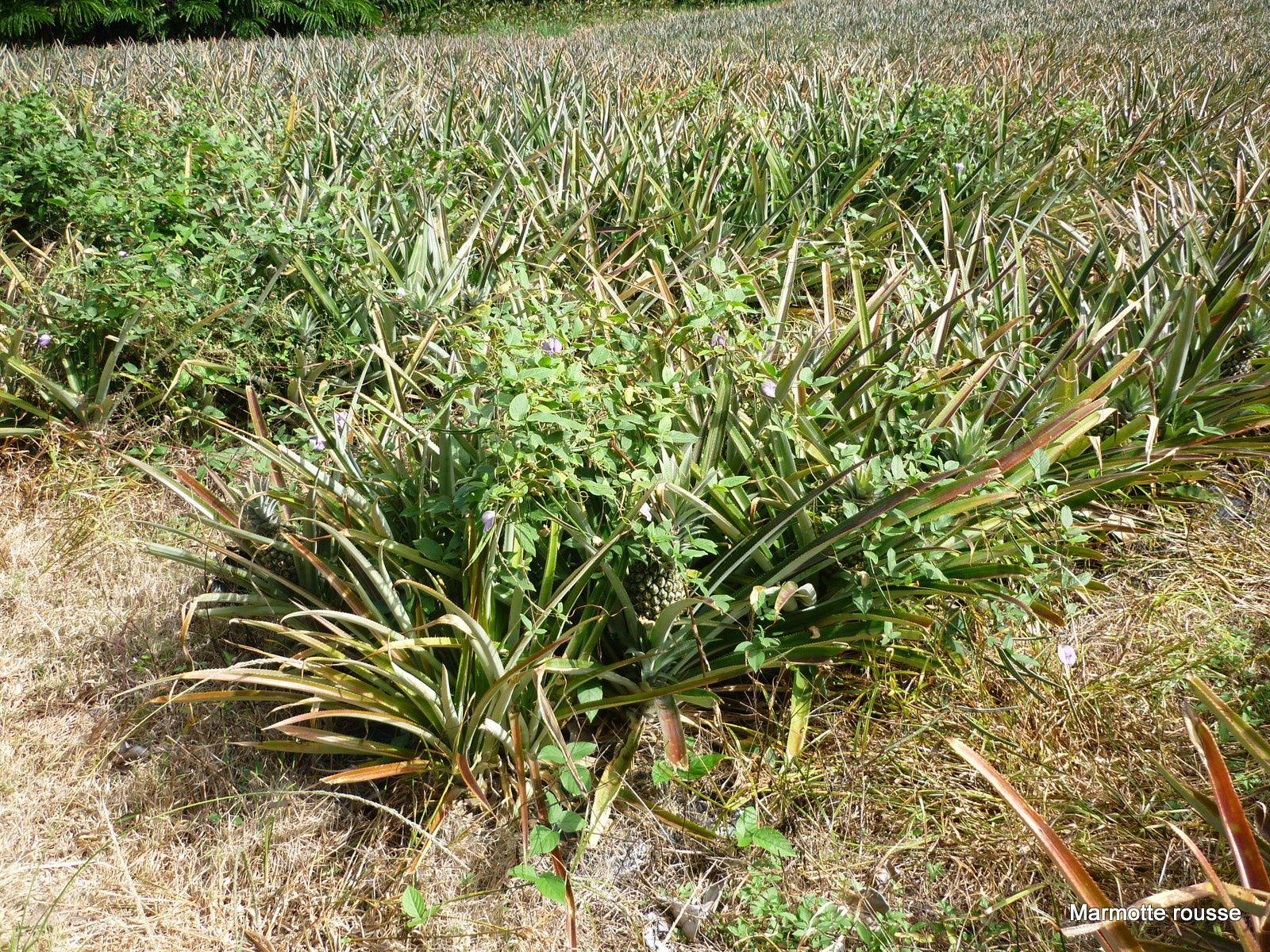 Marmotte découvre les plantes tropicales