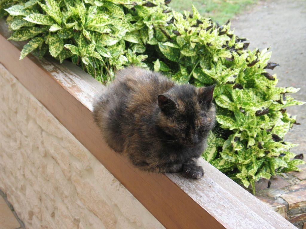 Des nouvelles de la petite rescapée: Magalou