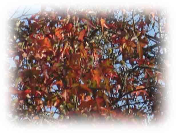 Des branches.
