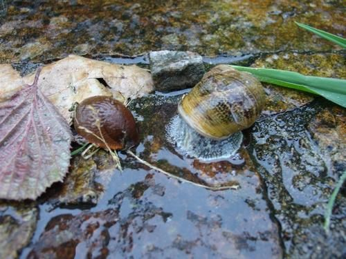 Histoire d'escargots.