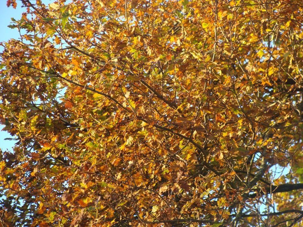 Au gré de mon jardin, mon chêne!