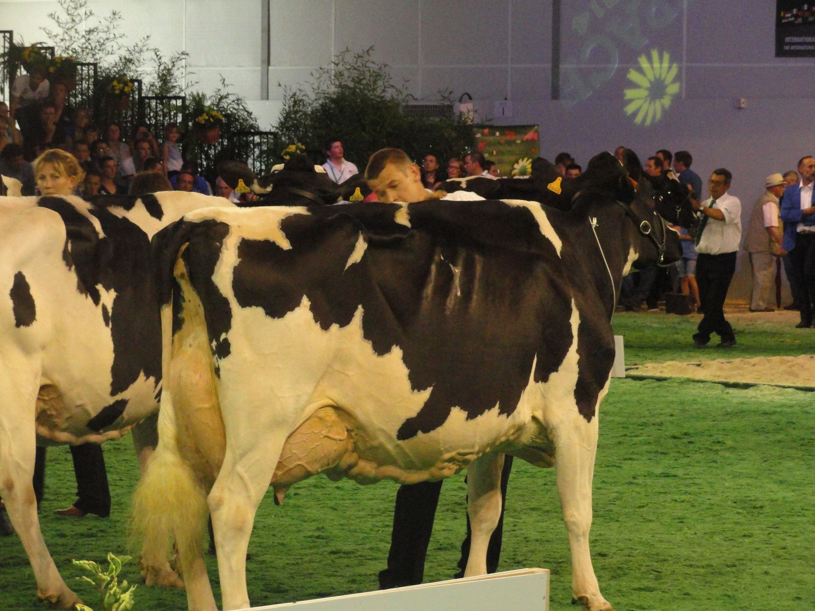 SPACE  2014    PRIM HOLSTEIN
