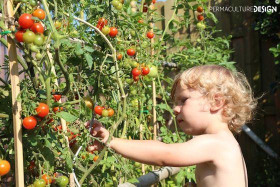 Permaculture : Concevoir un jardin pour nourrir une famille de 4 personnes (Conférence) [VF]