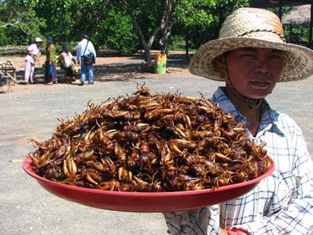 Le rôle de la FAO dans la promotion des insectes comestibles