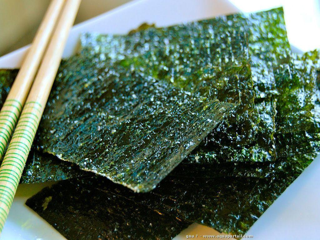 Les algues japonaises