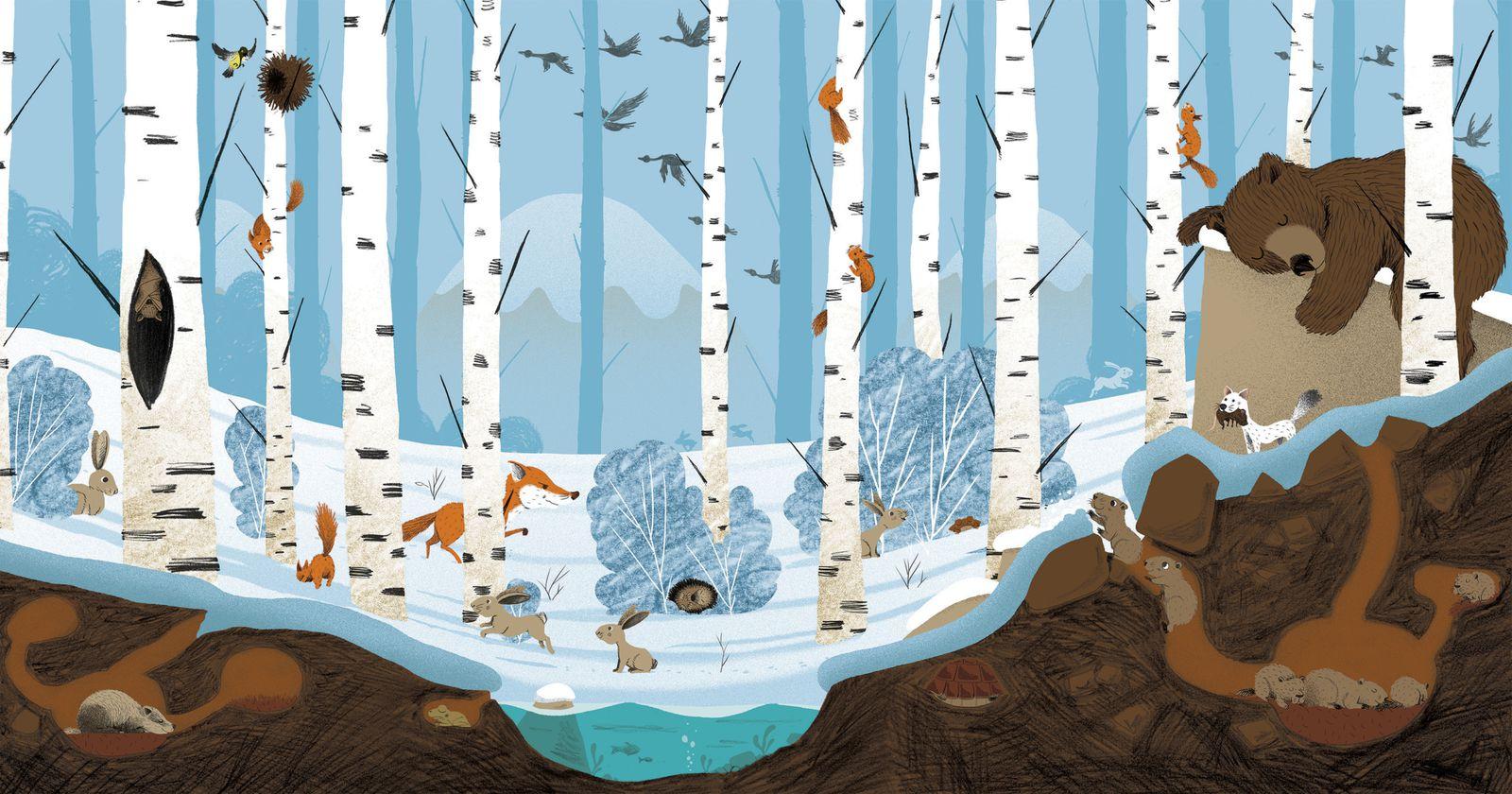 Ours, écureuils, hermine, renard, lapins, lièvre, chauve-souris, marmottes... en pleine hibernation pour Wakou