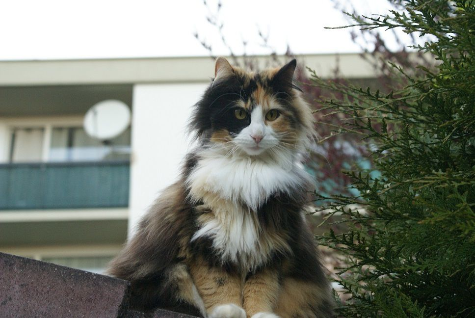Esmeralda dans La chatte sur un toit pas encore brûlant