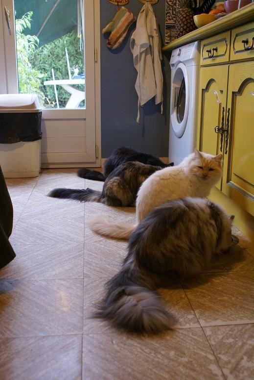 l'heure du repas : Anna, Bardolino, Calinka et Béliai