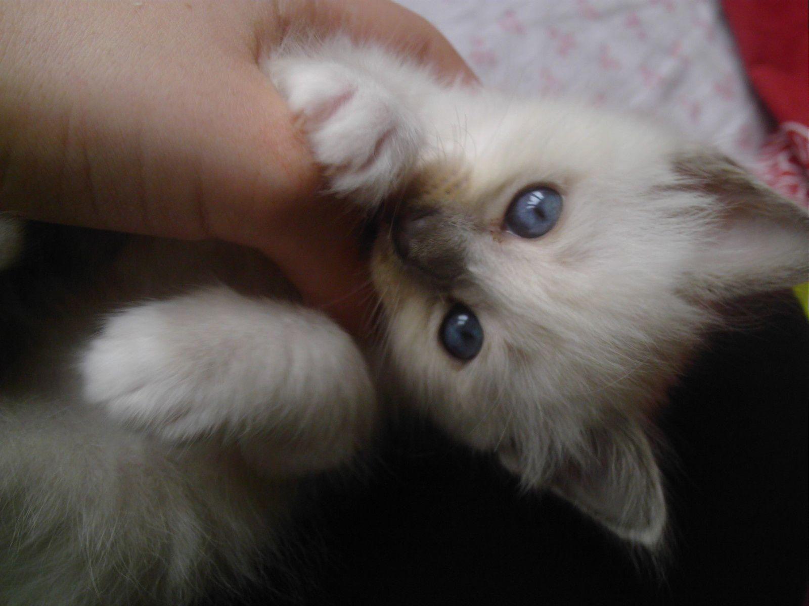 Il était une fois un chaton (2)