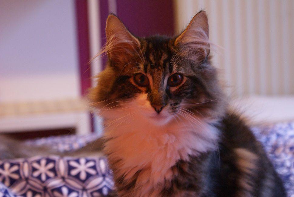 Le chaton n°9 représentait le petit Fanfan qui nous a quitté à l'âge d'un an.