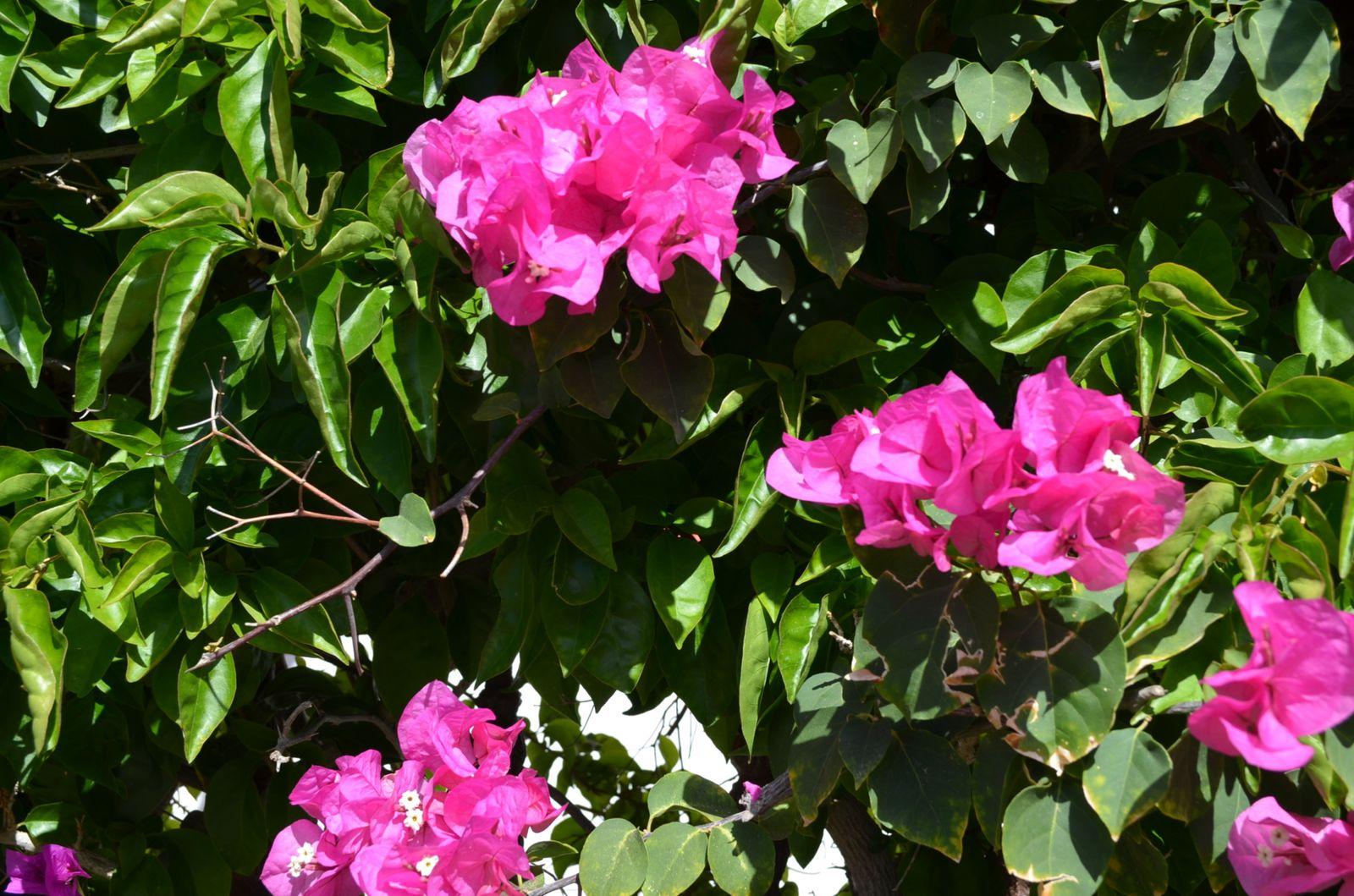 Un peu de fleurs et de couleurs...