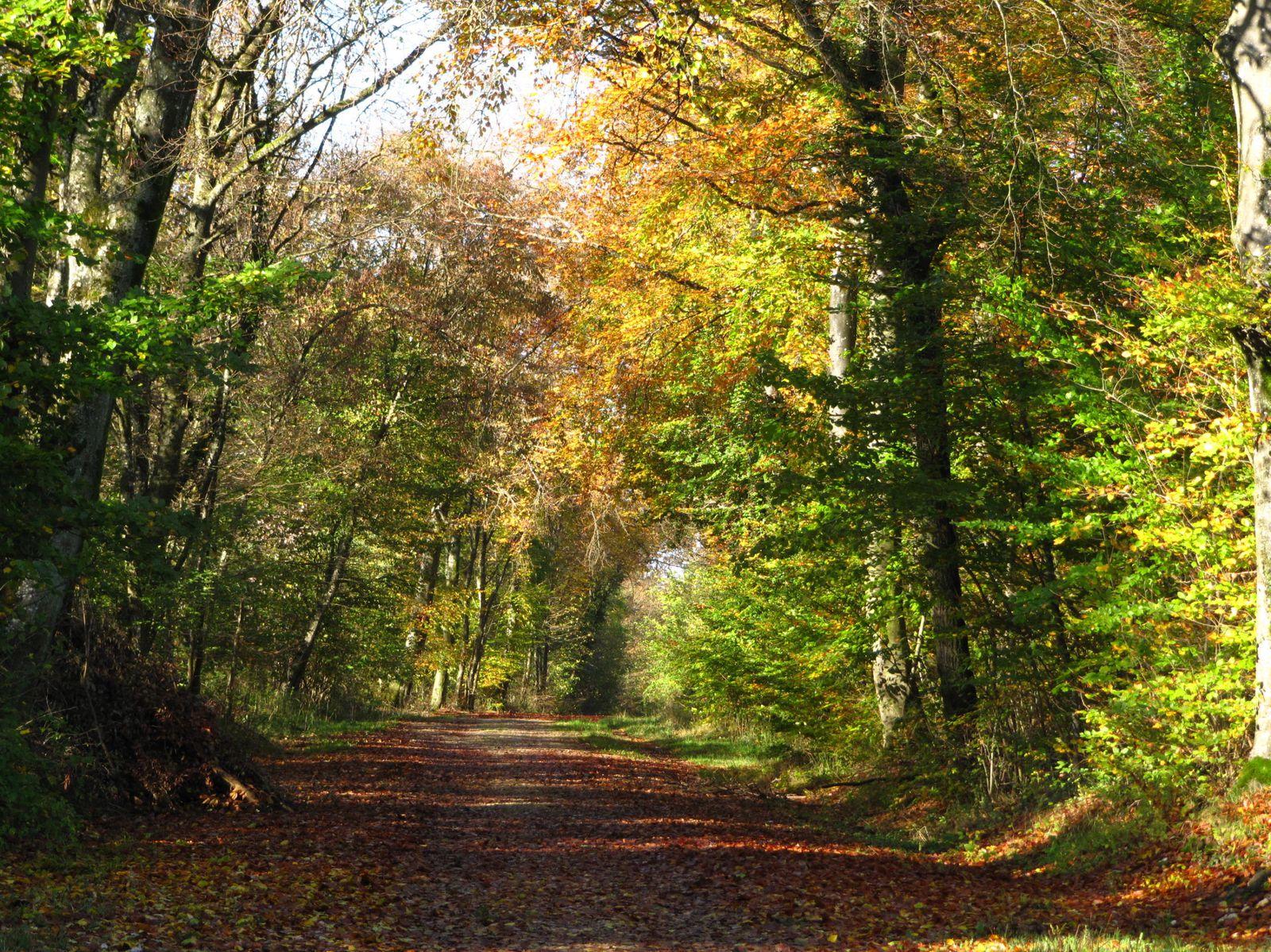 Feuilles d'automne dans le soleil