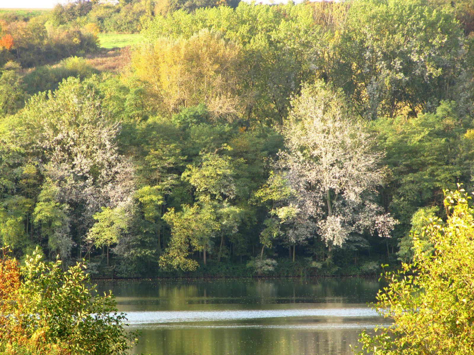 C'est un havre de paix pour la faune aquatique, en particulier les cormorans qui ne sont pas les bienvenus dans les autres étangs, dédiés à la pêche dans la vallée de la Moselle. Les déjections acides des cormorans ont brûlé les branches, et même fait crever les arbres.