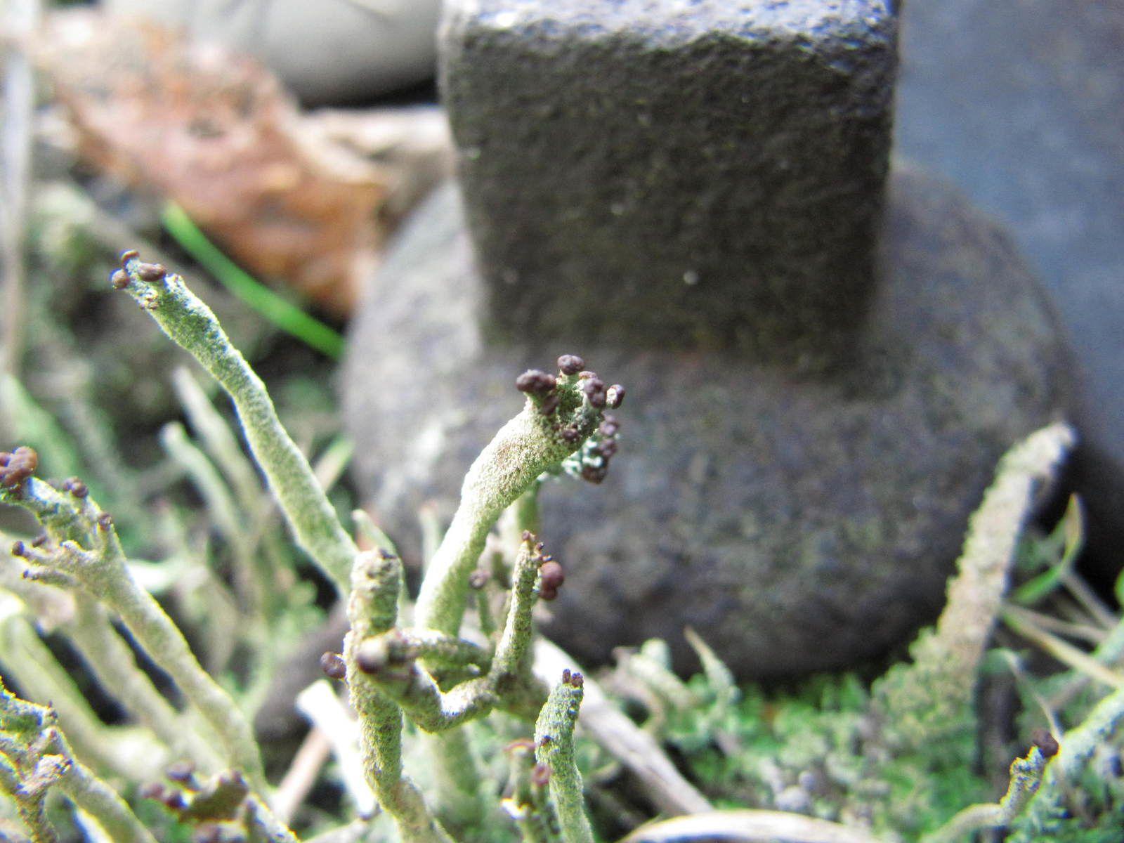 Les lichens de la vieille voie ferrée