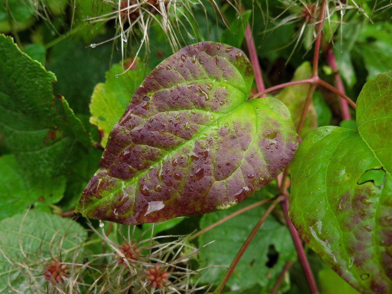 Quelques feuilles d'automne
