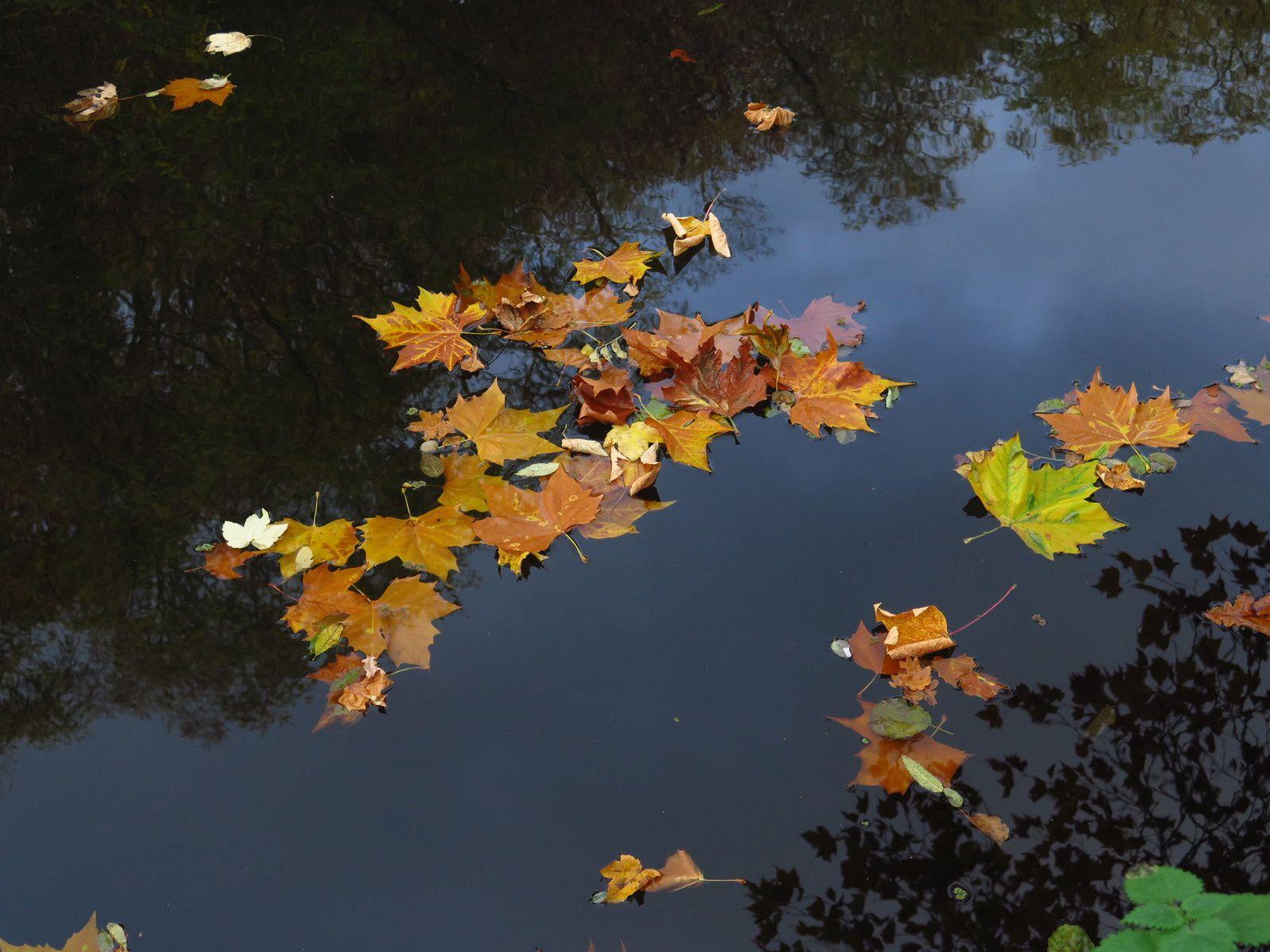 La dernière valse des feuilles mortes..