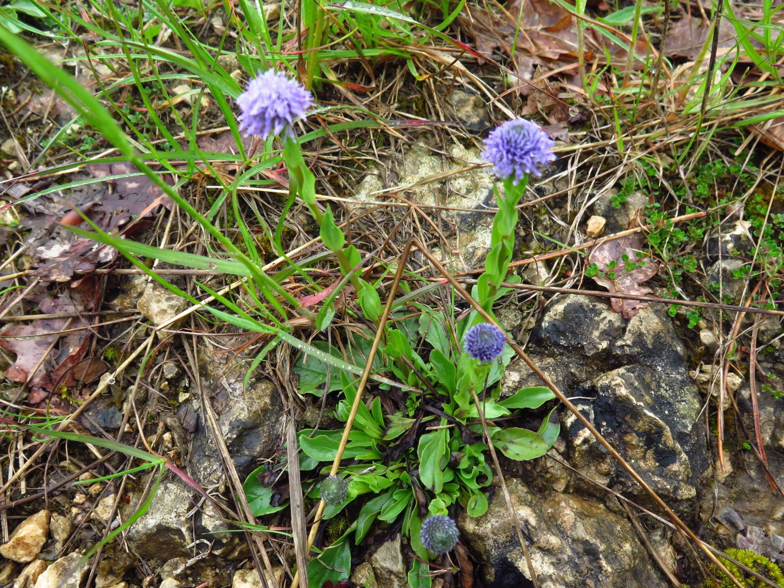Quelques fleurs de mai