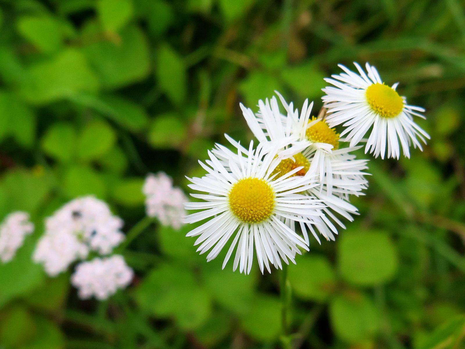 Petites fleurs de juillet