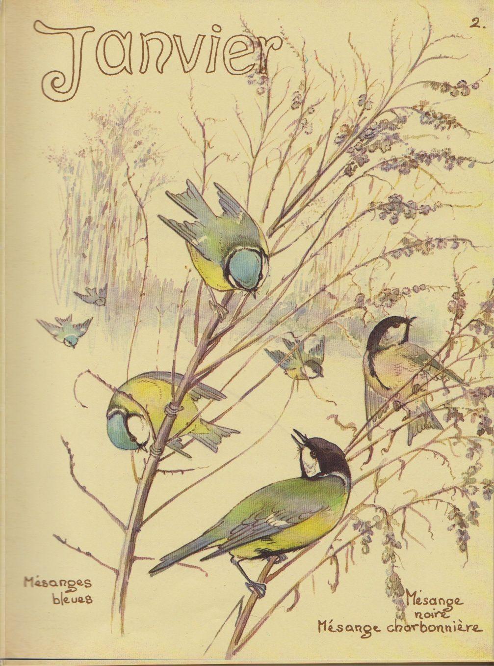 Journal champêtre d' Edith Holden ( 1906 )