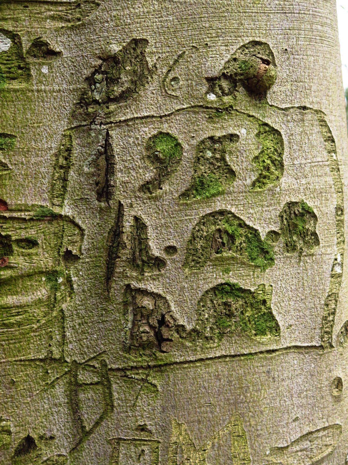 Forêt insolite..