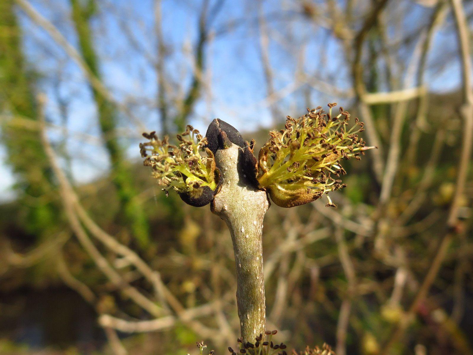 Feuilles et fleurs des arbres, fin mars