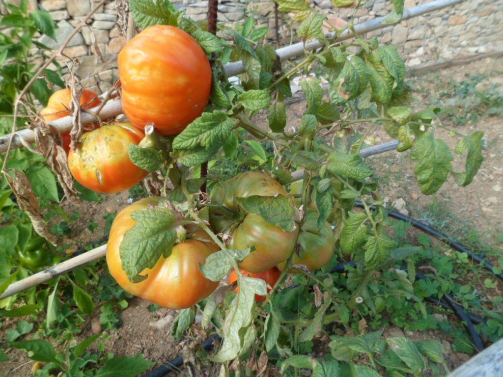 derniers fruits et légumes..