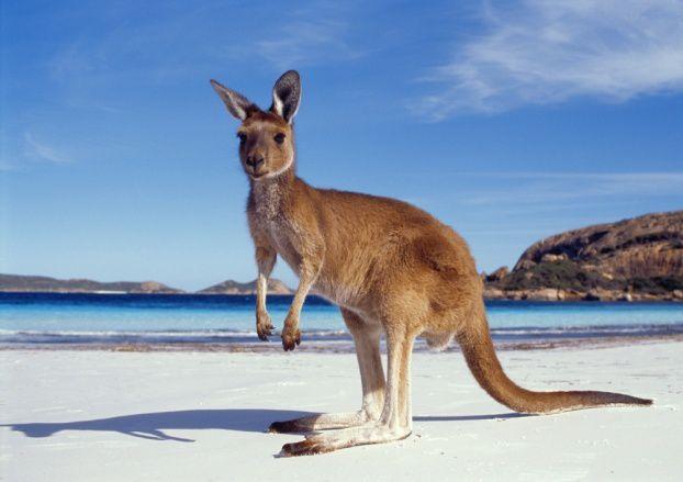 L'australie (sidney) et la mascotte