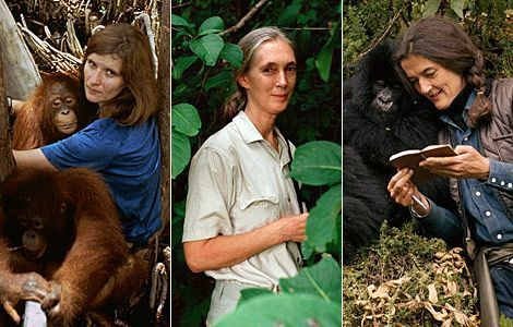 "The ""Trimates,"" The Founding Mothers of Primatology"