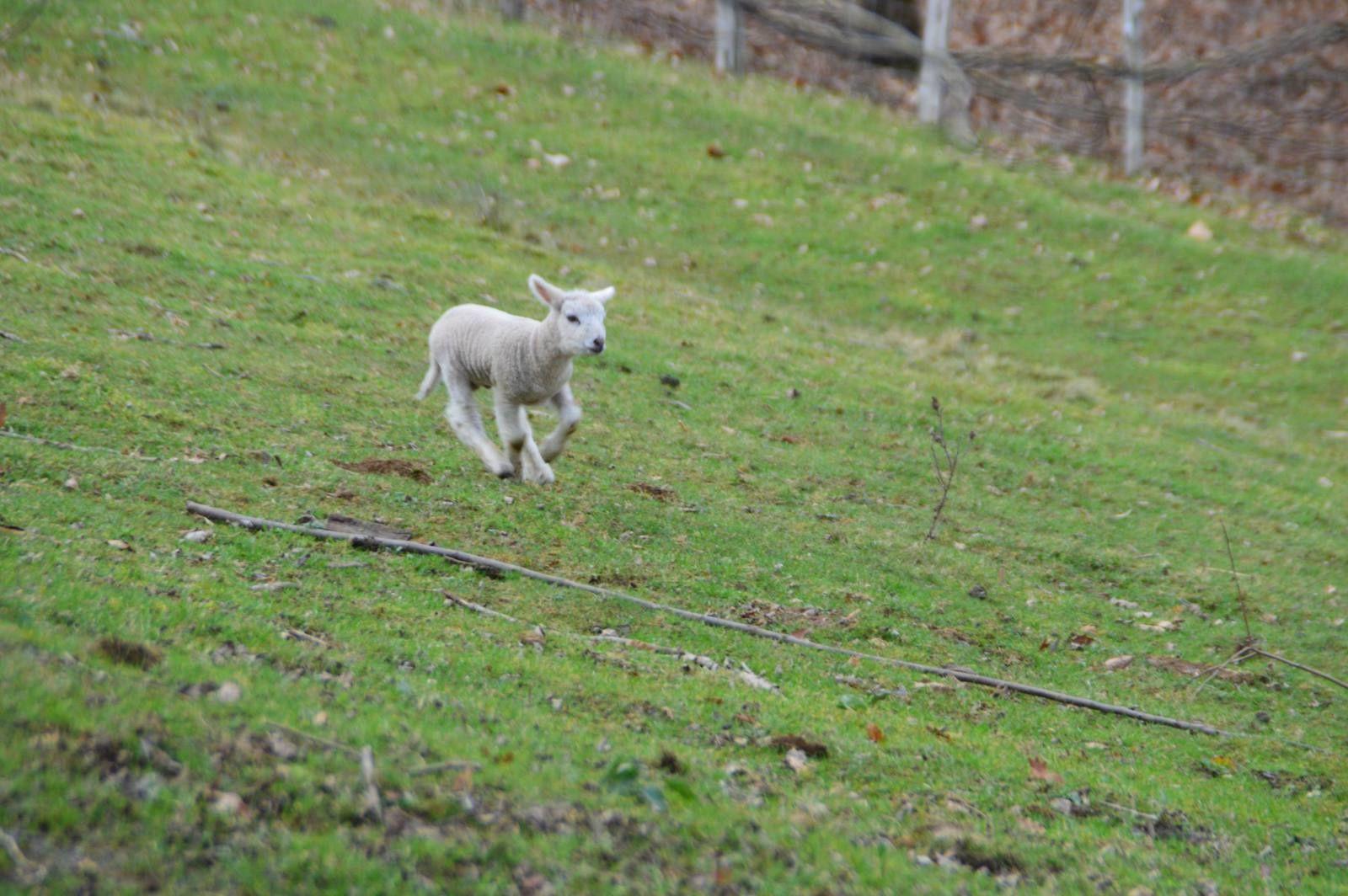Aujourd'hui: Gigot d'agneau