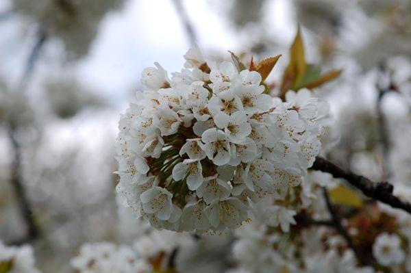 Le printemps arrive enfin !