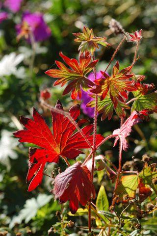 Fin octobre au jardin