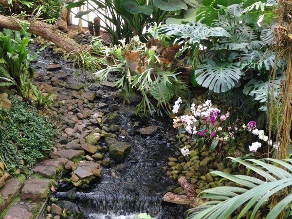 Forêt tropicale en Hollande