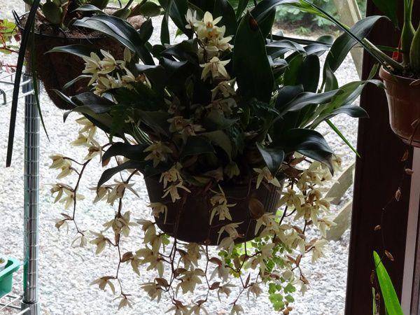 Bourse aux orchidées et autres plantes du Club