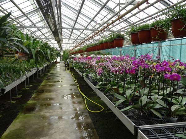Orchidarium de Prangins (suite)