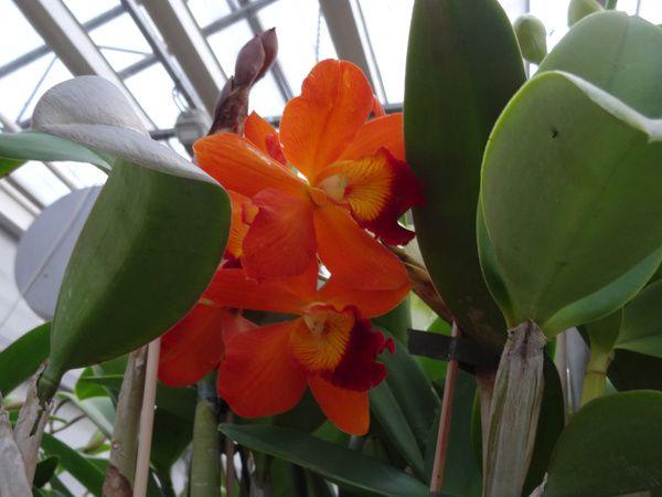 Eijgeraam Orchideeën