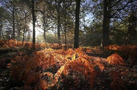 Un petit coin de la forêt de Rambouillet.